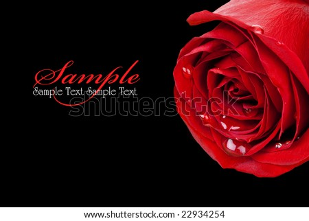 Red rose bulging with water droplets isolated on black background (with clipping path) - stock photo