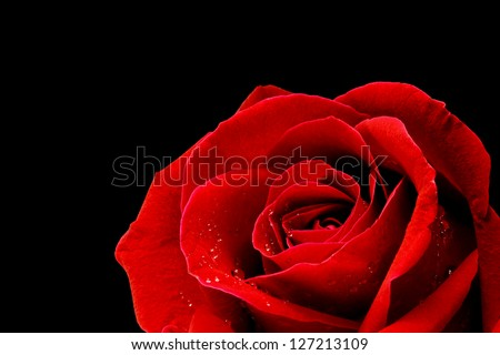 Red rose closeup on black background wallpaper - stock photo