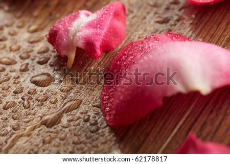 red rose, drop water - stock photo