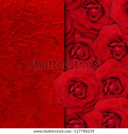 Red rose flower background. - stock photo
