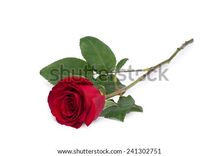 red rose flower close-up isolated on white clipping path included - stock photo