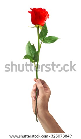 red rose flower in hand men isolated on white background - stock photo
