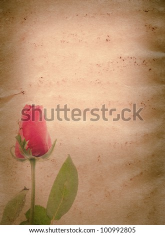 red rose flower old grunge paper texture background - stock photo