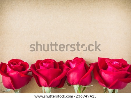 red rose flower on blank paper page for creative your message text here - stock photo