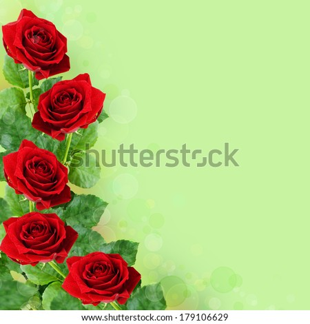 Red rose flowers on green background
