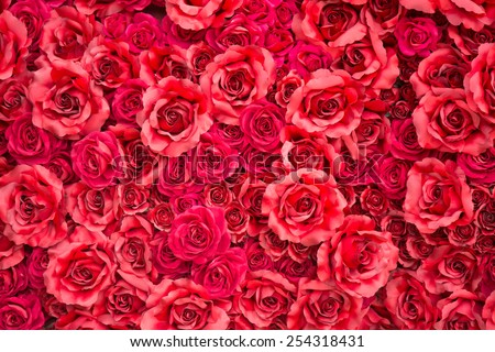 red rose for backgrounds - stock photo