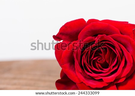 Red rose in corner on table with room for text - stock photo