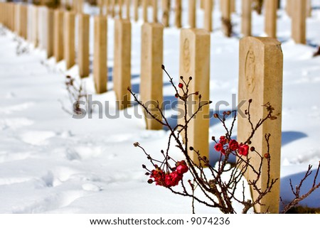 Red rose in front of snowy cemetery (rose in focus, shallow DOF) - stock photo