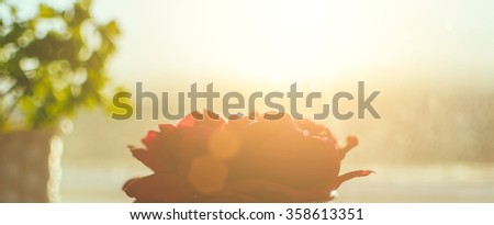 Red rose in sunset time on the home window - stock photo