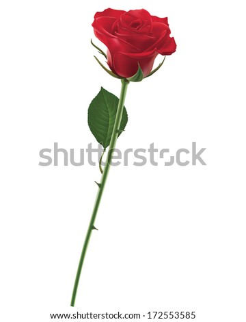 Red Rose isolated on white, Illustration
