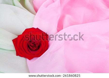 Red rose lays on a pink and green matter - stock photo
