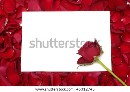 Red rose macro close up with a copy space blank note - stock photo