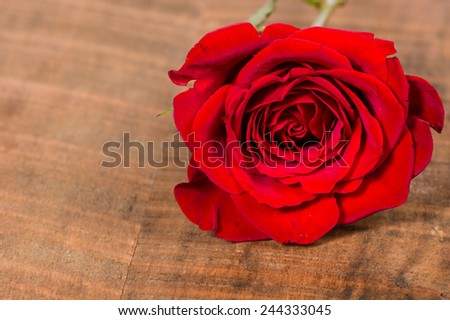 Red rose on a rough wooden table - stock photo