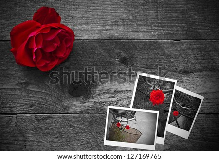 Red rose on a rustic wooden background - stock photo