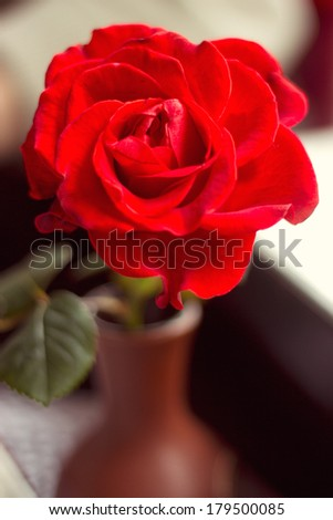 Red rose on a table in a cafe