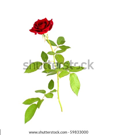 rose bud christian single men The rose cross (also called rose croix and rosy cross) is a symbol largely associated with the semi-mythical christian representing in a single emblem the.