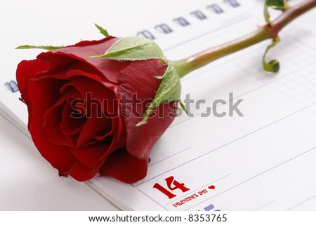 Red rose on calendar page indicating 14 of February - Valentine's day - stock photo