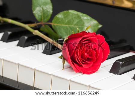 Red rose on keyboard piano. - stock photo
