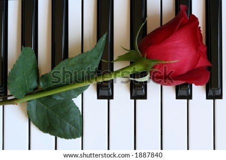 Red Rose on Piano - stock photo