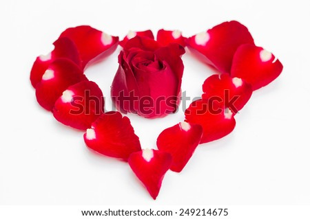 Red rose on red petal in heart shape   - stock photo