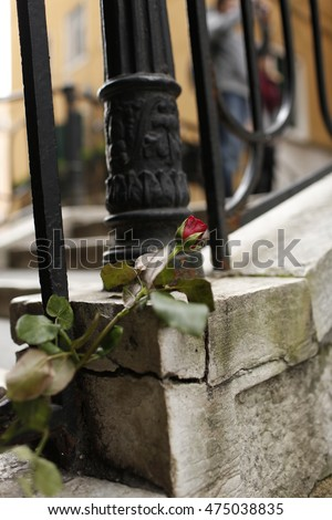 Red Rose on the Bridge - Venice - Italy