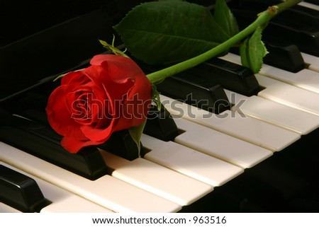 Red rose on top of organ - stock photo