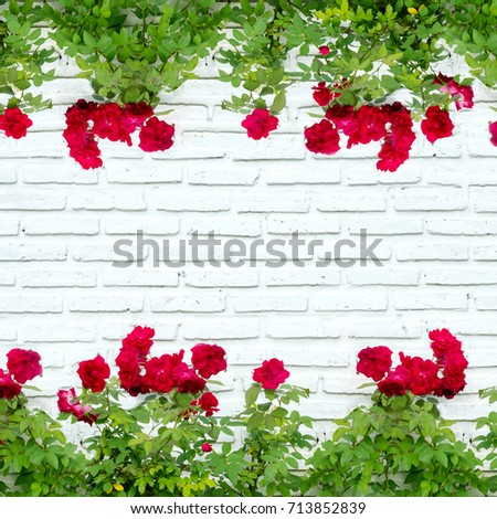 red rose on white brick wall