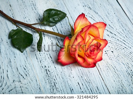 Red rose on wooden background - stock photo