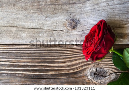Red rose over wooden background - stock photo