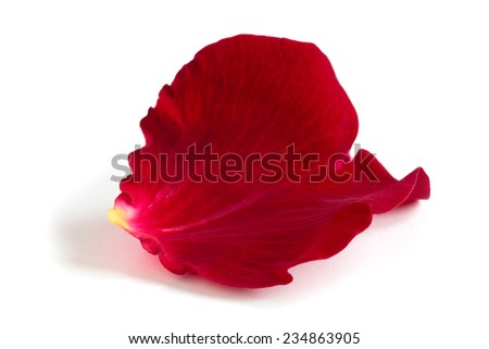Red rose petal isolated on white background. - stock photo