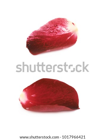 Red rose petal isolated over the white background , set of several different foreshortenings