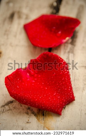 Red rose petal with drops dew on old wood - stock photo