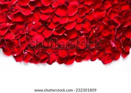 Red rose petals background, pattern. Perfect for wedding design, Valentine's Day, anniversary etc. Isolated on white. - stock photo
