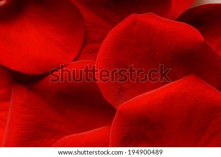red rose petals closeup background - stock photo