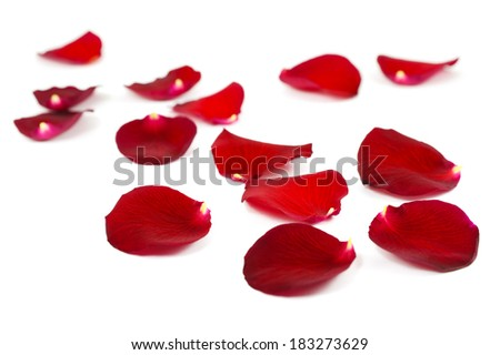 Red rose petals isolated on white - stock photo