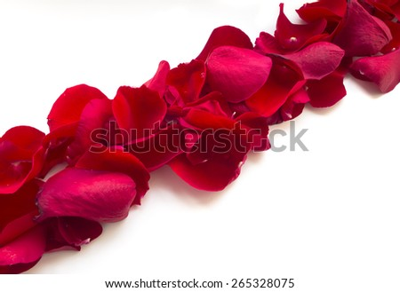 Red Rose Petals, isolated on white background - stock photo