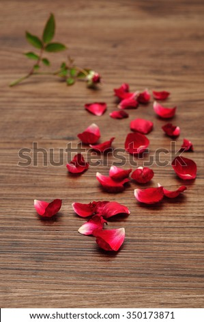 Red rose petals that has fallen of the stem that is out of focus