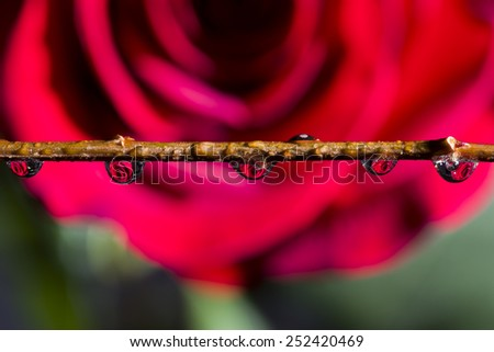 Red rose reflections inside clear water drops - stock photo