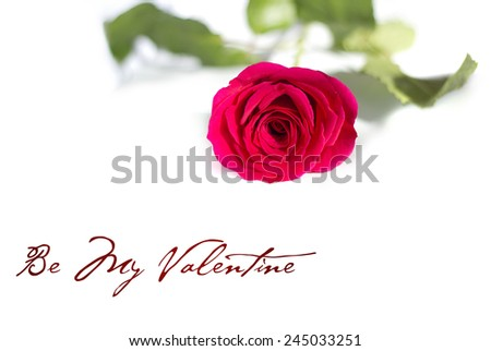 Red Rose stem on white - stock photo