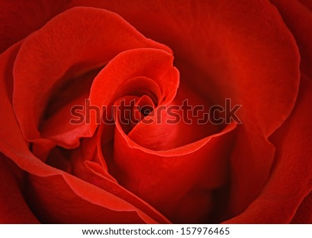 Red rose wallpaper - stock photo