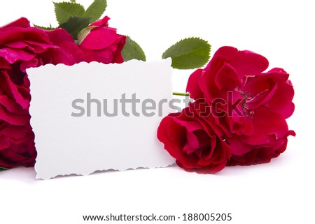Red rose with petals and blank gift card for text - stock photo