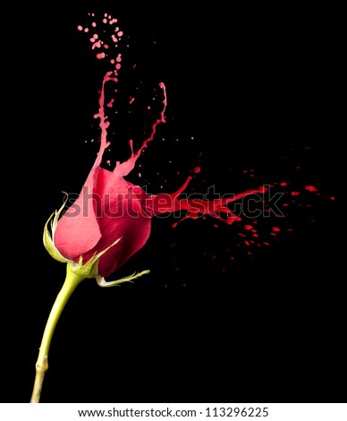 red rose with red splashes on black background - stock photo