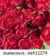 Red roses background - stock photo