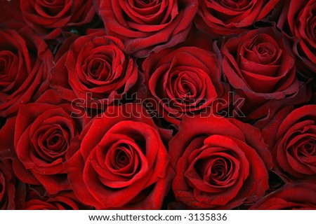 Red roses background - beautiful texture - stock photo
