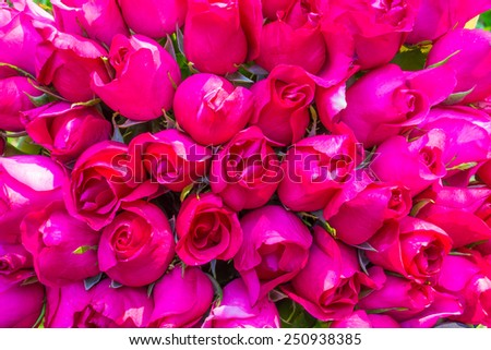 Red roses background for valentines' day - stock photo