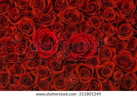 Red roses background, High Angle View - stock photo