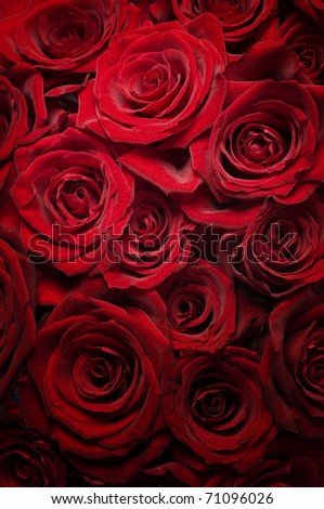 Red Roses background.Selective focus - stock photo
