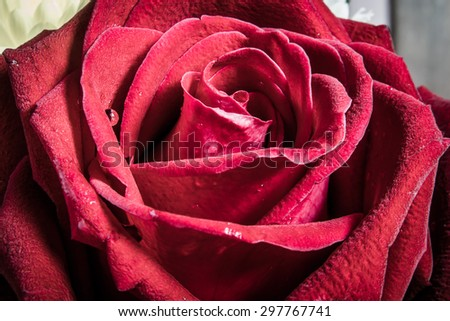 red roses background vintage (HDR) - stock photo