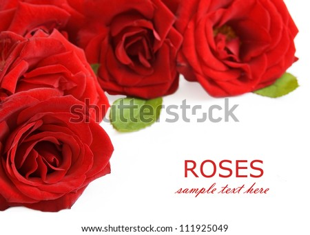 Red roses bouquet isolated on white background with sample text - stock photo