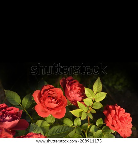 Red roses bouquet on black background with copy space - stock photo